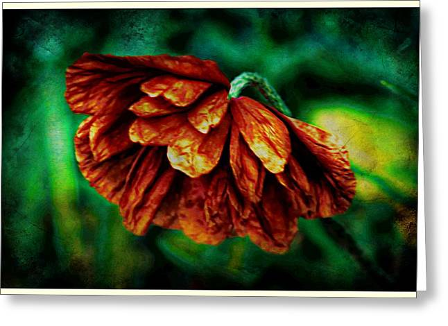 Poppy Art Greeting Card by Jennifer Kosminskas
