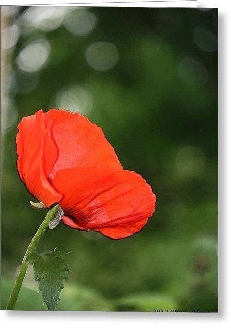 Greeting Card featuring the photograph Poppy Dreams by Penny Hunt