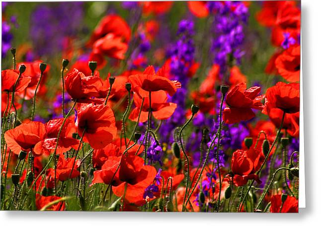 Poppy Field Greeting Card by Emanuel Tanjala