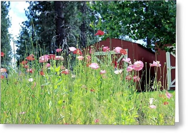 Poppy Field Greeting Card by Myrna Migala