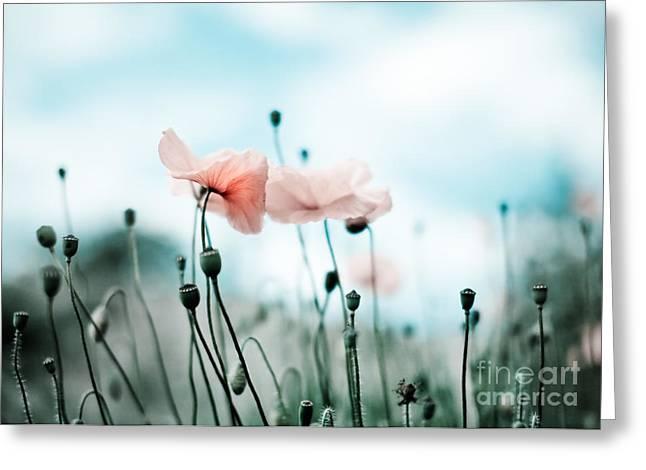 Poppy Flowers 02 Greeting Card