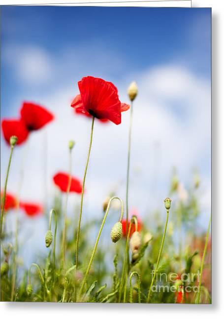 Poppy Flowers 06 Greeting Card by Nailia Schwarz