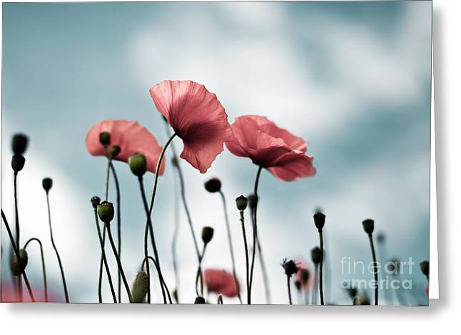 Poppy Flowers 07 Greeting Card by Nailia Schwarz