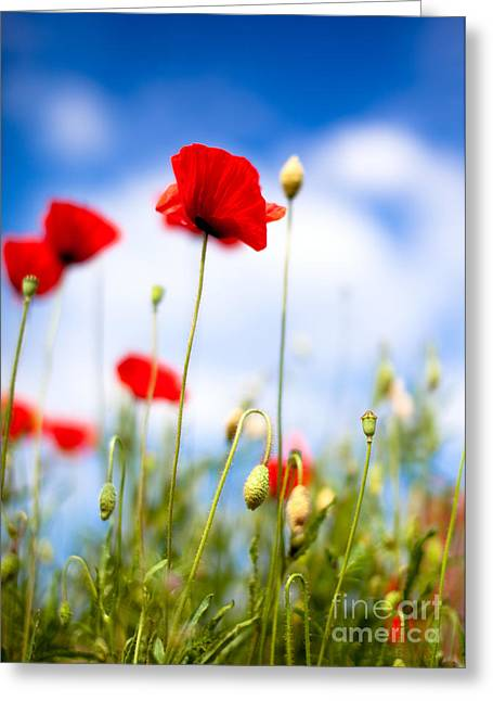 Poppy Flowers 12 Greeting Card by Nailia Schwarz