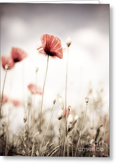 Poppy Flowers 15 Greeting Card