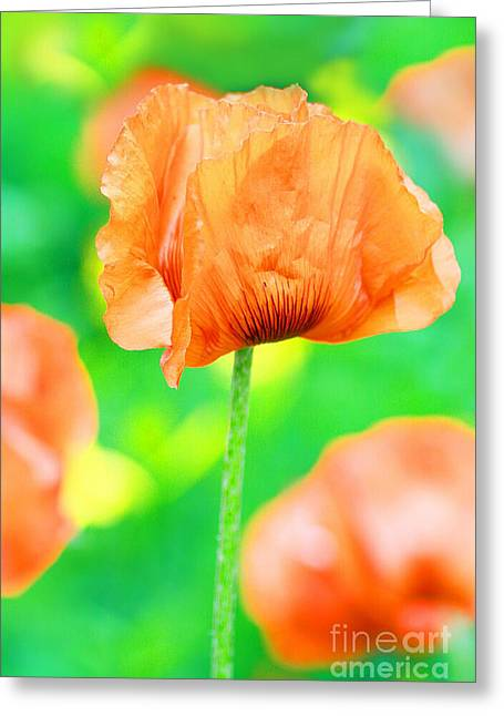 Poppy Flowers In May Greeting Card by Anita Antonia Nowack