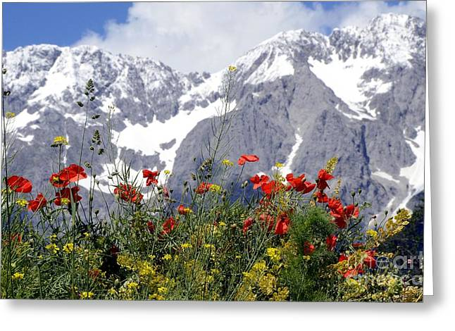 Poppy Flowers Under The Mountains Greeting Card