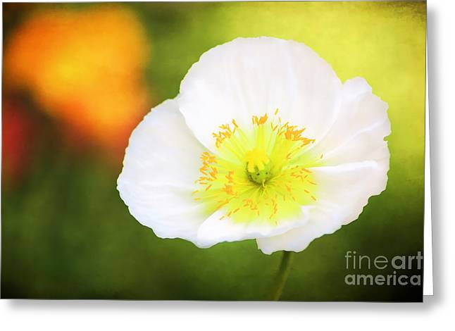 Poppy Of Peace Greeting Card
