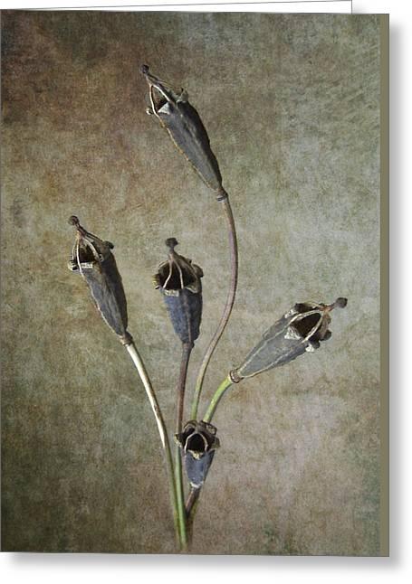 Poppy Seed Cases Greeting Card by Debra Kelday