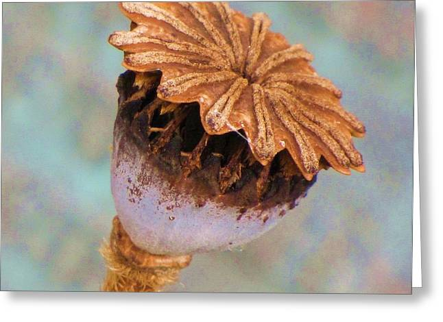 Greeting Card featuring the photograph Poppy Seed Pod by Michele Penner