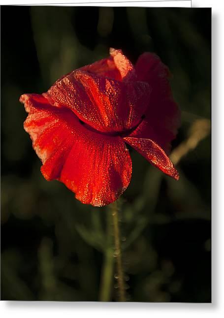 Poppy Greeting Card by Svetlana Sewell