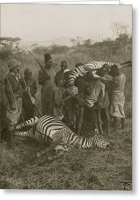 Porters Carry Off A Kill Of Two Zebras Greeting Card by Underwood And Underwood