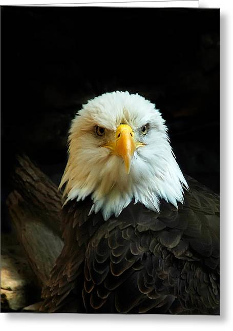 Greeting Card featuring the photograph Portrait American Bald Eagle by Randall Branham