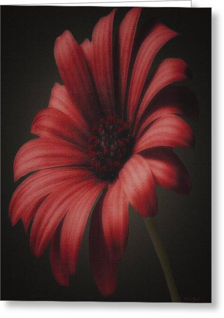 Portrait Of A Daisy Greeting Card by Tom York Images