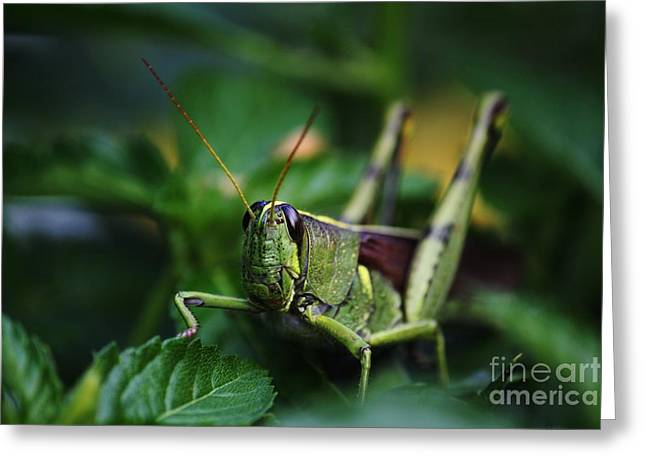 Portrait Of A Grasshopper Greeting Card