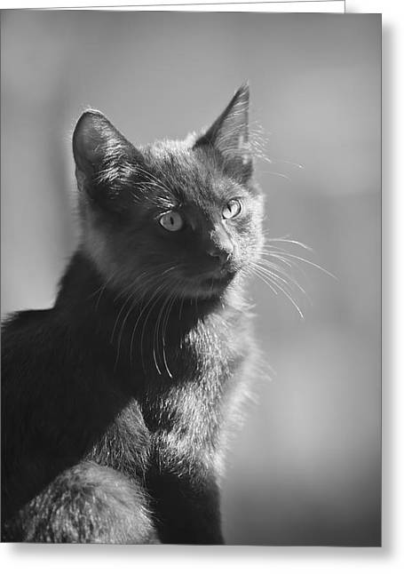 Portrait Of A Kitty Greeting Card by Kim Henderson