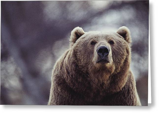 Portrait Of A Kodiak Brown Bear Greeting Card by Joel Sartore