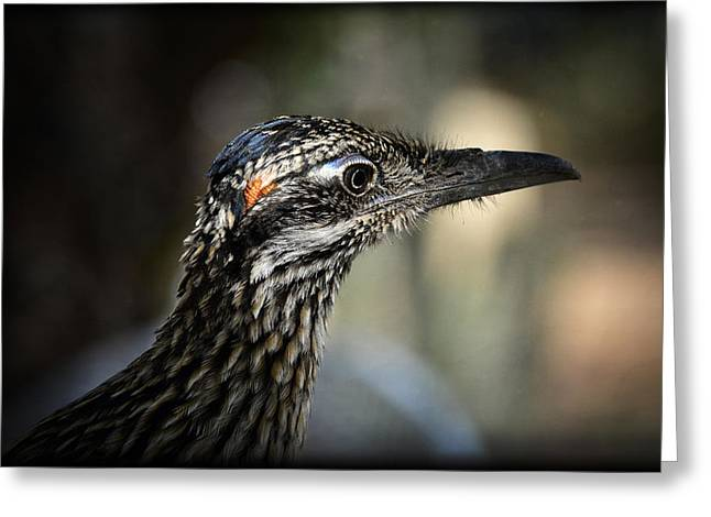 Portrait Of A Roadrunner  Greeting Card by Saija  Lehtonen