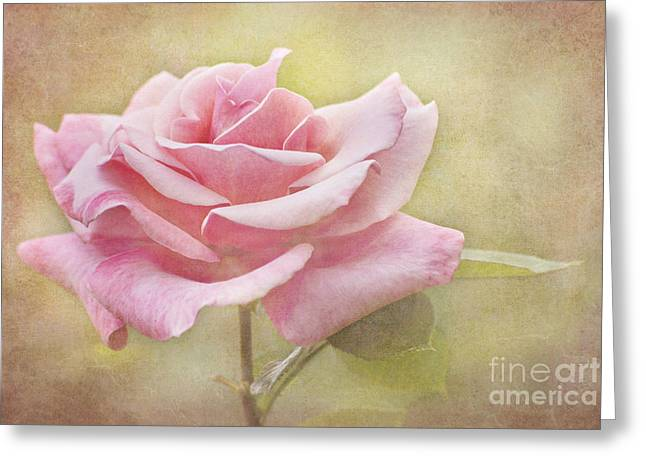 Portrait Of A Rose Greeting Card