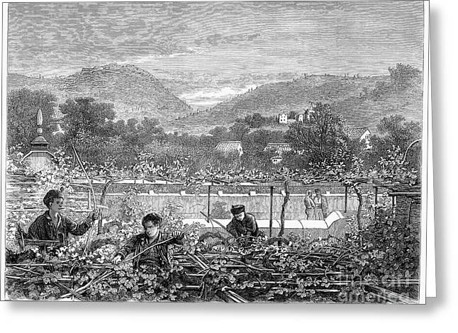 Portugal: Vineyard, 1873 Greeting Card