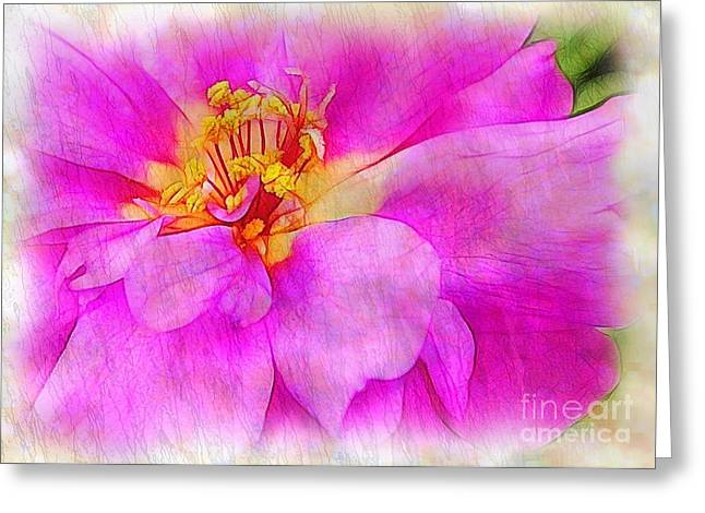 Portulaca With Texture Greeting Card by Judi Bagwell