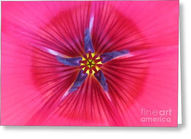 Potential Photography Greeting Card by Tina Marie