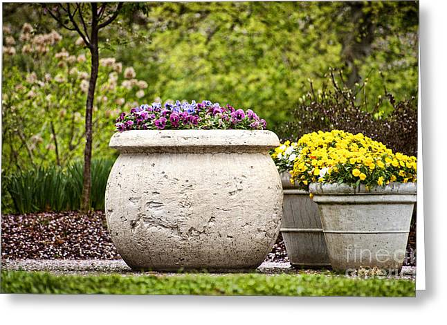 Greeting Card featuring the photograph Pots Of Pansies by Cheryl Davis