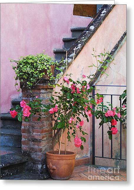 Potted Plant At Base Of Stairs Greeting Card by Jeremy Woodhouse