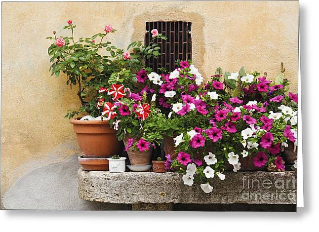Potted Plants On Stone Bench Greeting Card
