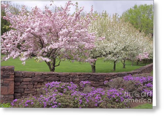 Powder Hill Blossoms Greeting Card by Cindy Lee Longhini