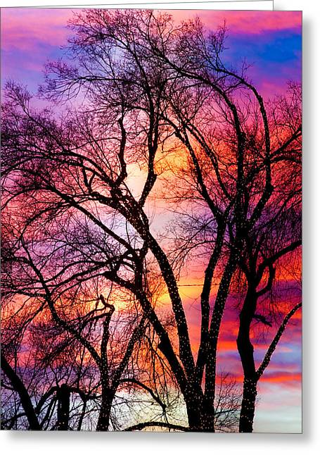 Powerful Trees Greeting Card by James BO  Insogna