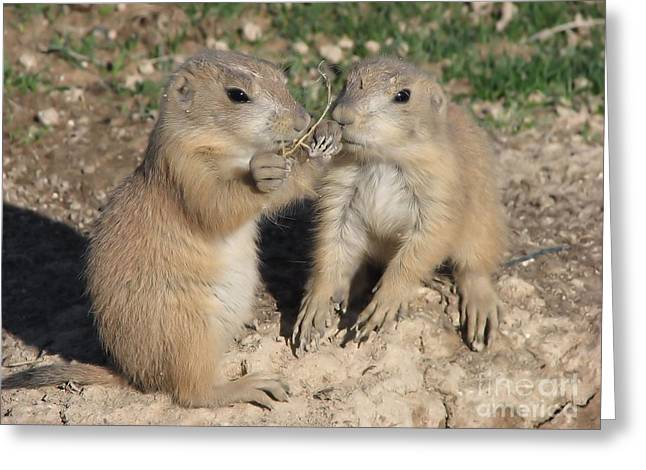Prairie Dog Duo Greeting Card by Michelle H
