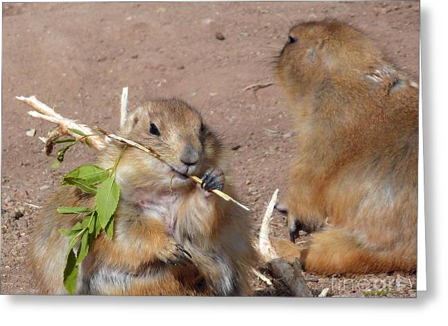 Prairie Dogs Greeting Card by Methune Hively