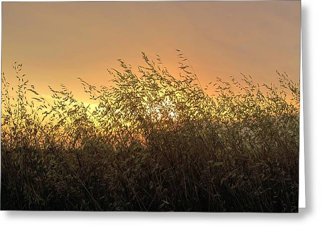 Prairie Dusk Greeting Card by Leanna Lomanski