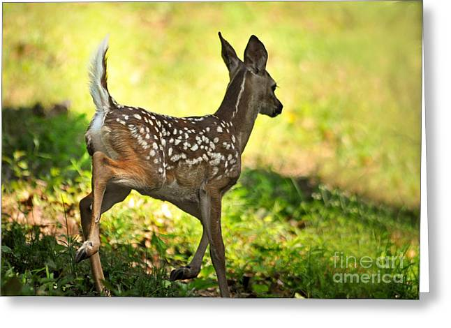 Greeting Card featuring the photograph Prancing Fawn by Nava Thompson