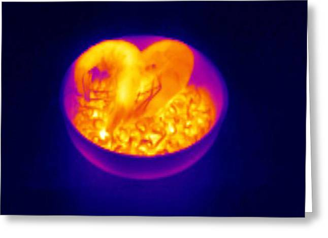 Prawns And Rice, Thermogram Greeting Card by Tony Mcconnell