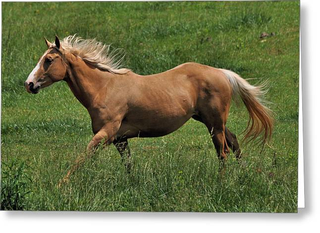Precious In High Trot - C2993c Greeting Card by Paul Lyndon Phillips