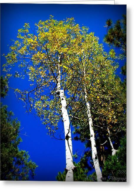 Prescott Fall Aspen Canopies Greeting Card