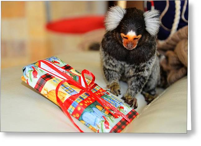 Present Time Chewy The Marmoset Greeting Card by Barry R Jones Jr