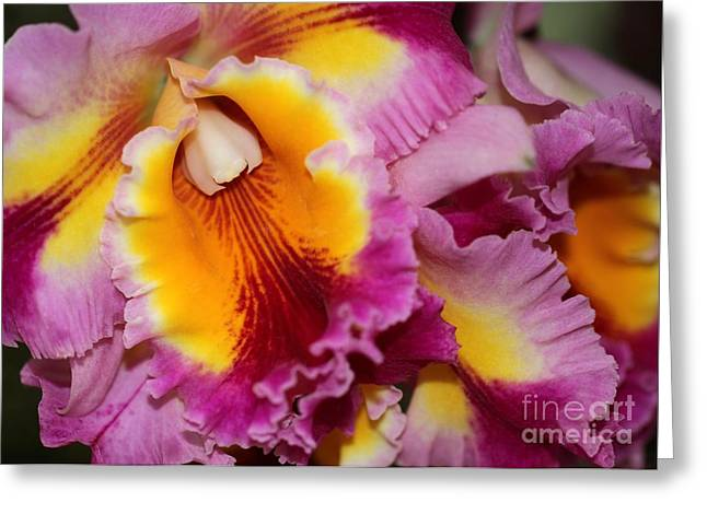 Pretty And Colorful Orchids Greeting Card by Sabrina L Ryan