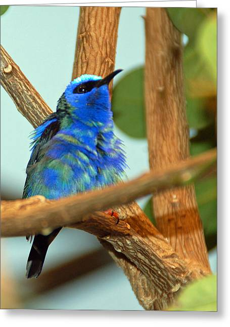 Pretty Bird Greeting Card by Aimee L Maher Photography and Art Visit ALMGallerydotcom