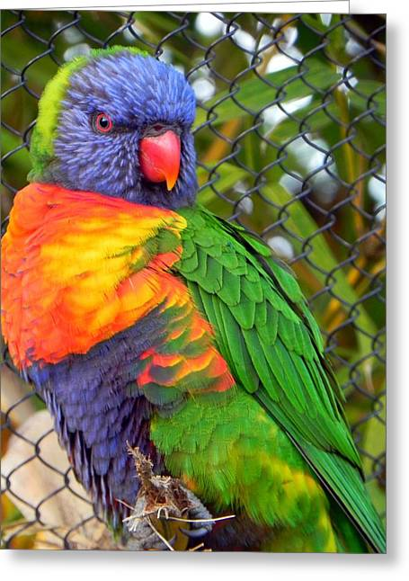 Pretty Bird Greeting Card