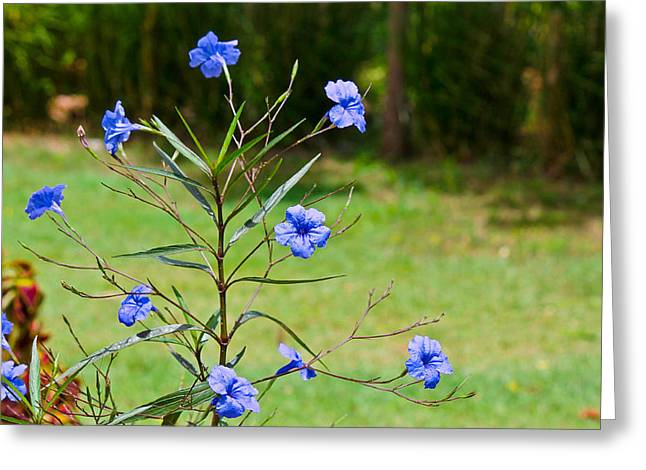 Pretty Blue Flowers Greeting Card by David Alexander