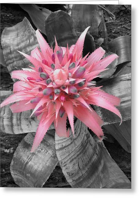 Pretty Bromeliad Greeting Card by Carrie Munoz