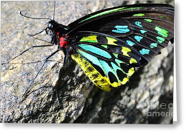Pretty Colors Greeting Card by Kathleen Struckle