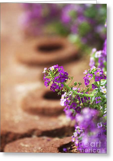 Pretty Flowers Greeting Card by Patty Malajak