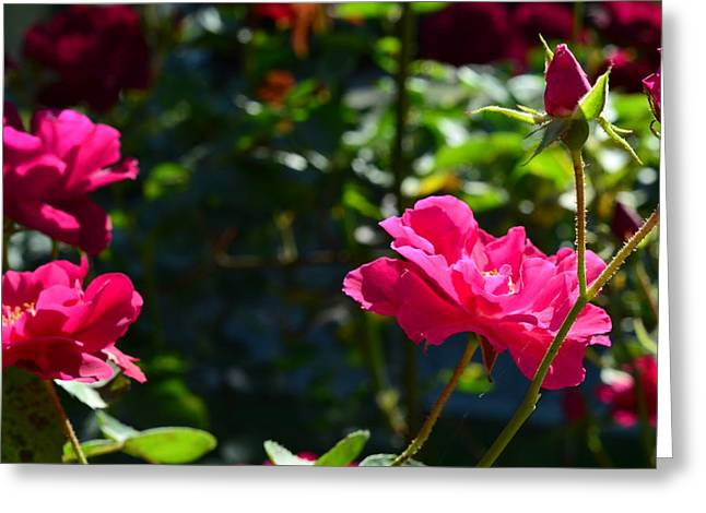 Pretty In Pink Greeting Card by Chandra Wesson