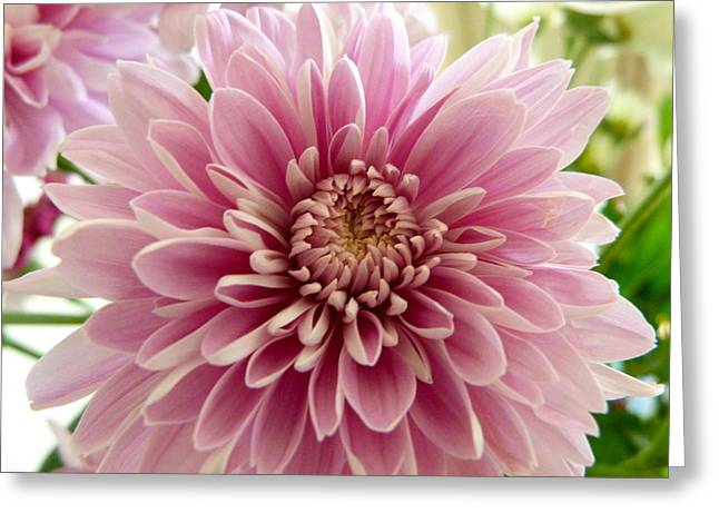 Pretty In Pink Greeting Card by Karen Grist