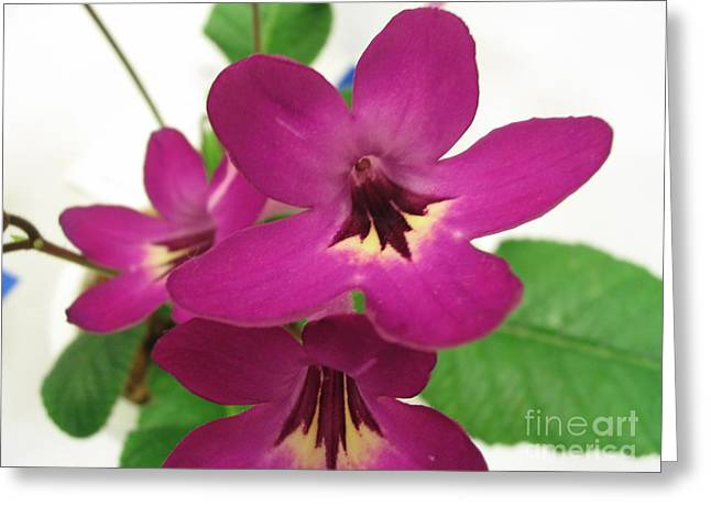 Greeting Card featuring the photograph Pretty In Pink by Mark Robbins