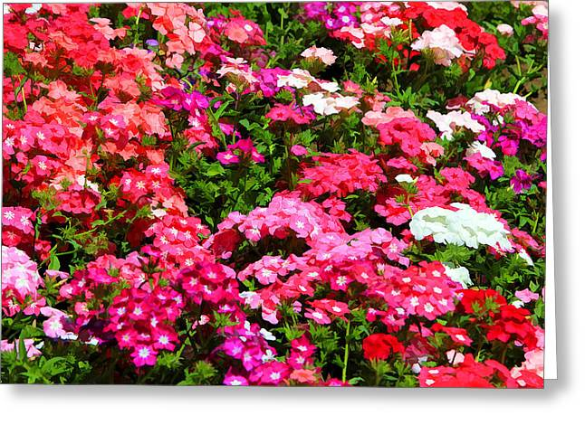 Greeting Card featuring the photograph Pretty In Pink by Paul Svensen